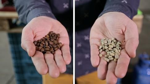 FOTO 2 Koffie groen en gebrand