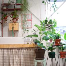 Rood & Bloem Plantenwinkel in Utrecht