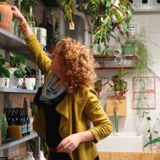 Rood & Bloem Winkel Planten met/in pot kopen in Utrecht