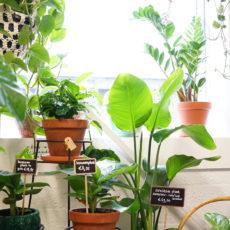 Rood & Bloem Zuurstofrijke Zuurstof producerende planten voor thuis en kantoor kopen in Utrecht
